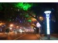 城市道路照明与道路绿化树木关系的研究