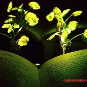 夜间发光植物未来或应用于夜间照明